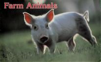 Cover of: Farm animals | National Geographic Society (U.S.)